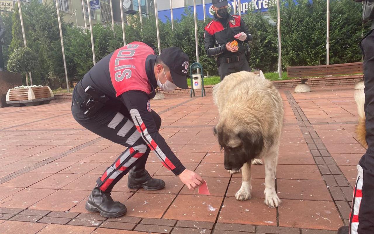 İstanbul Polisi sokak hayvanlarını unutmadı!