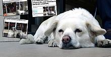 Gazeteler manşetlerine taşıdı! Dünya Trabzon'daki bu köpeği konuşuyor
